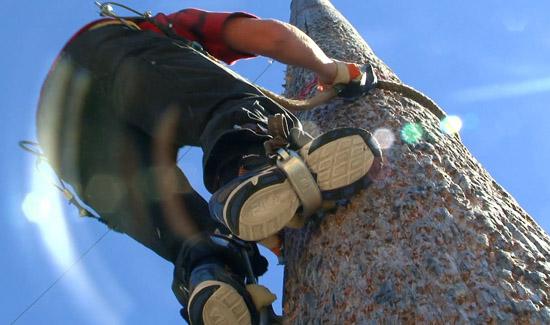 Jack Pine Lumberjack Show Events Speed Climb